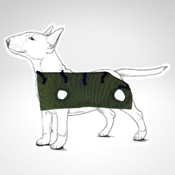 Dibujo de Bull Terrier con faja post quirúrgica