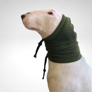 Bull Terrier con capucha para Perfecta frente a procesos de infección de oídos en perros
