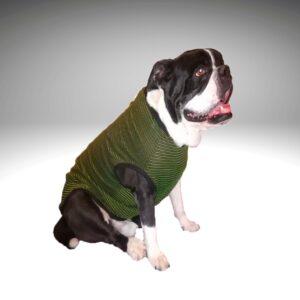 Perros en verano con camiseta verde filtro solar