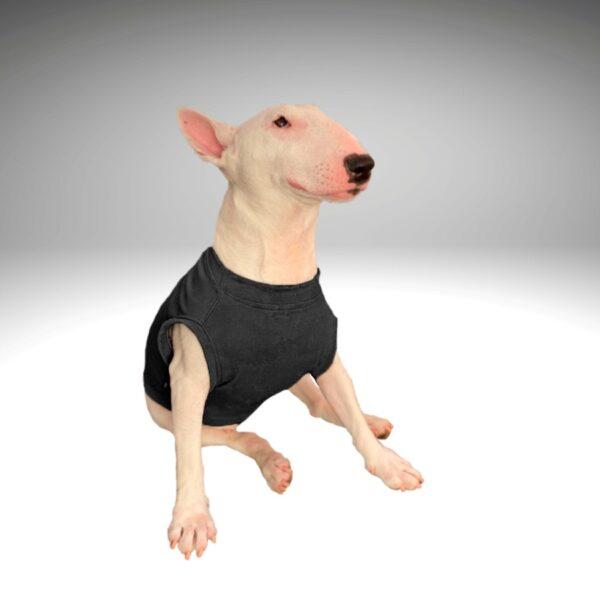 Bull Terrier blanco con camiseta para perros en verano