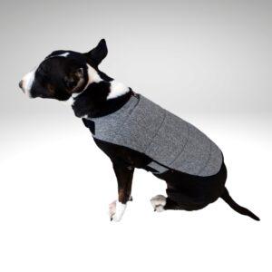 Bull Terrier negro con abrigo de perro mediano